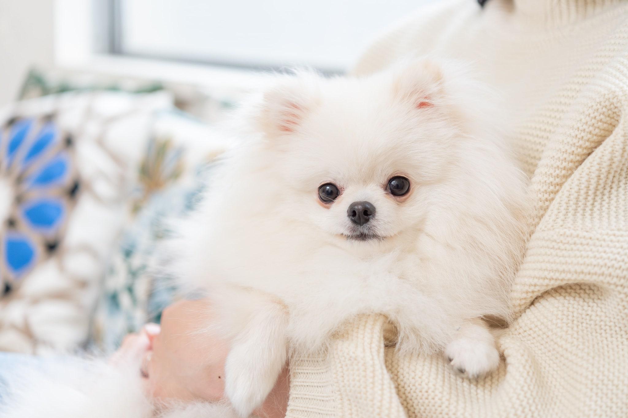 愛犬の毛艶(けづや)が悪化する原因と対策まとめ