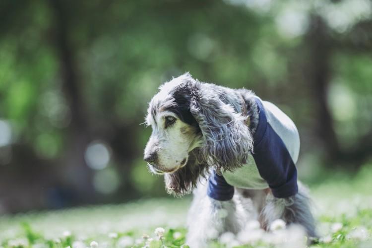 老犬が水を飲まない理由と対処法