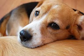 犬も歯磨きにも歯磨き粉?犬用歯磨き粉を使うメリットとオススメグッズ5選