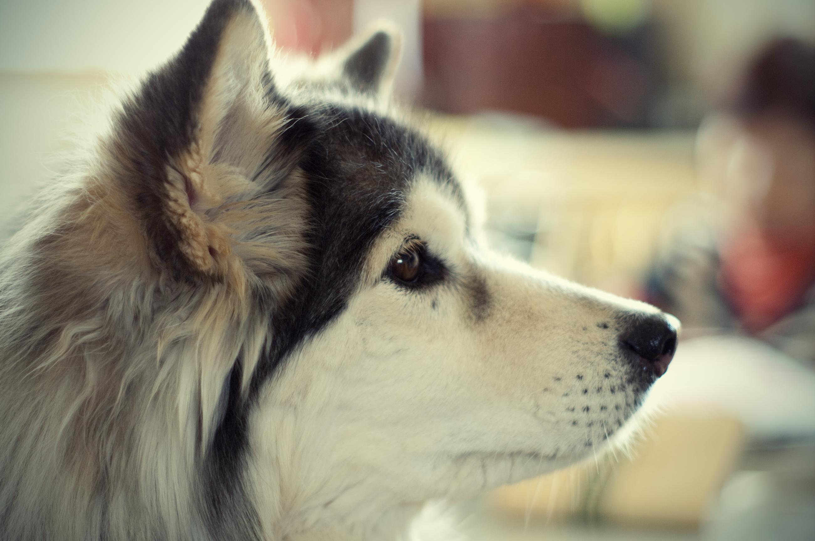 犬の歯磨きって必要?病気予防のための歯磨きにおすすめの方法3選