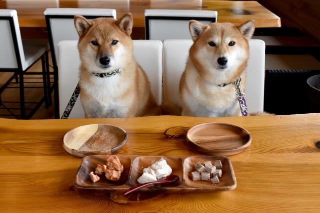 犬がご飯を食べない!食欲不振の考えられる原因とその対策