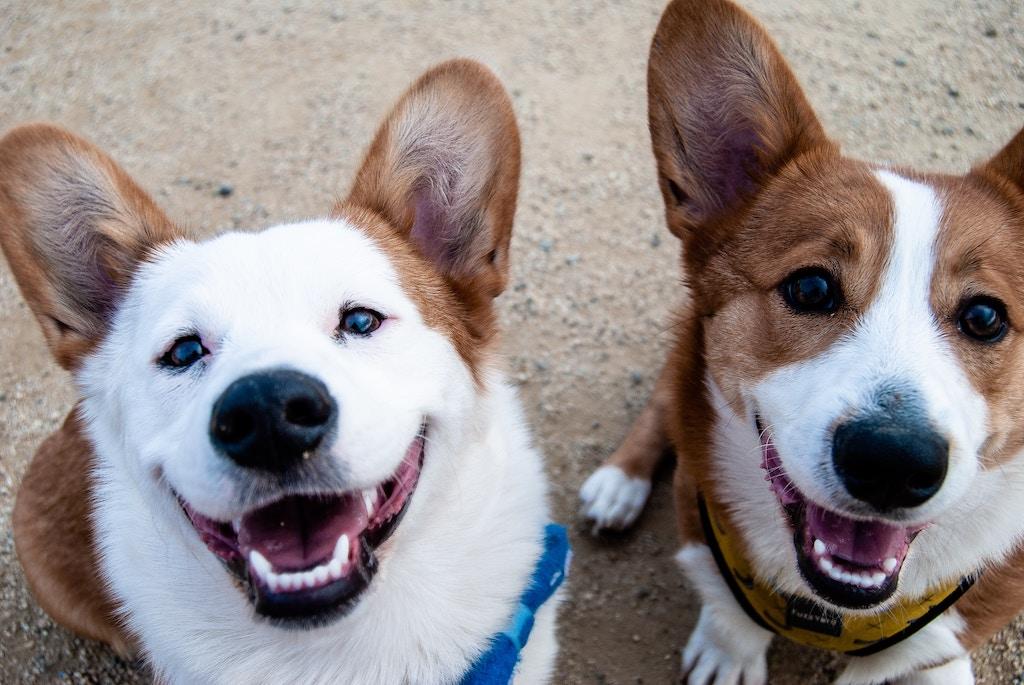 愛犬に目やにができる3つの原因と危険度・対処法