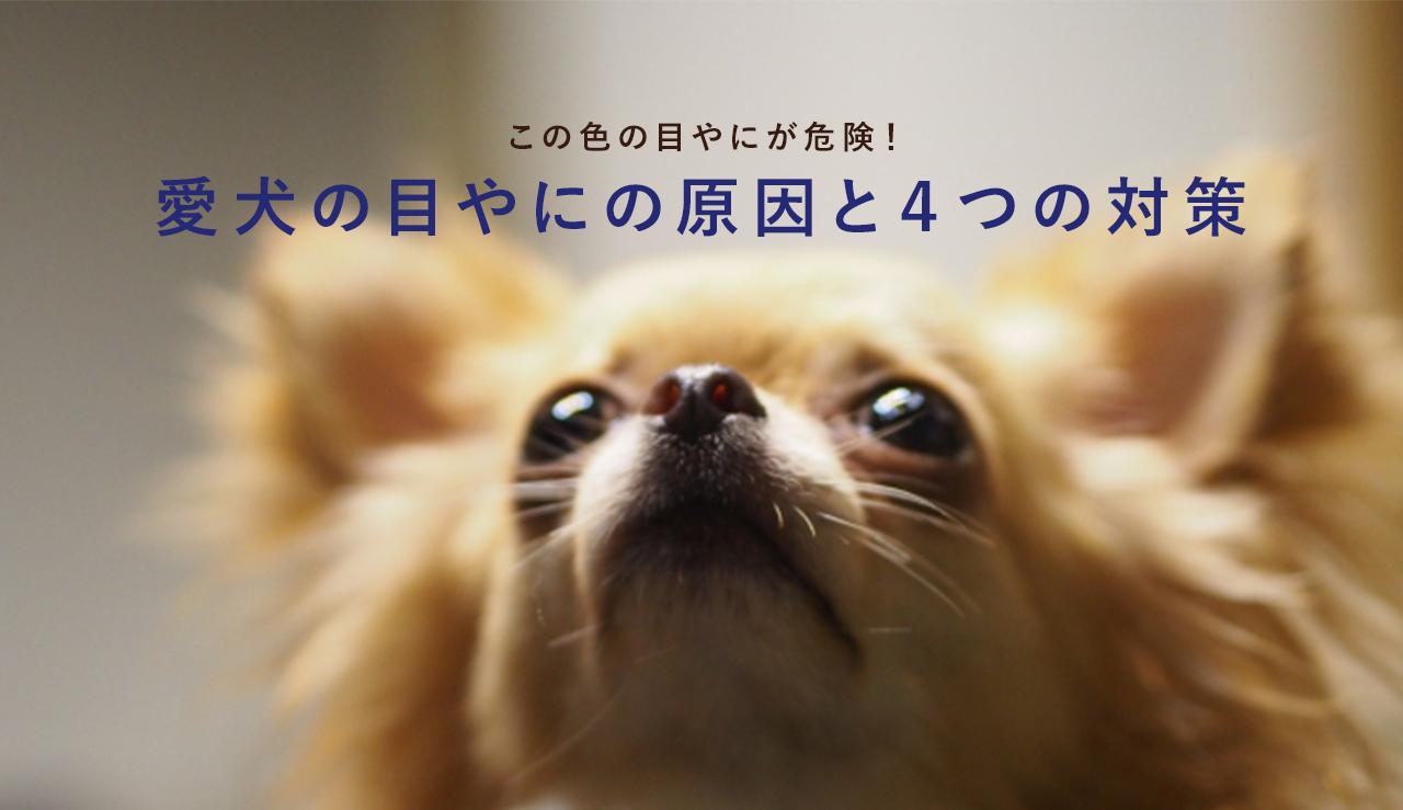 目やに 子犬