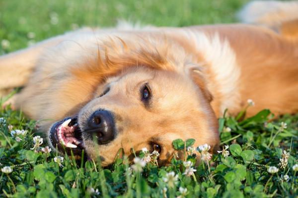 シートで丁寧に!犬の歯磨きシートの効果や使い方をご紹介
