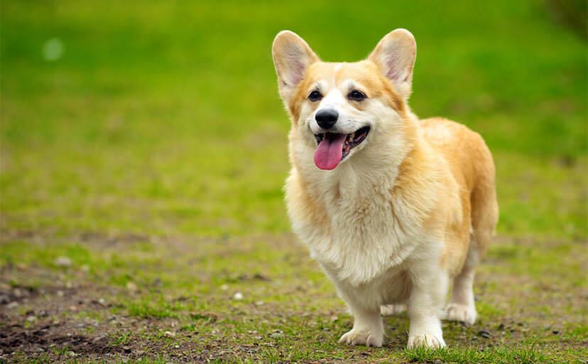 見落としが?犬の歯磨きは「内側」を入念に!やり方を解説