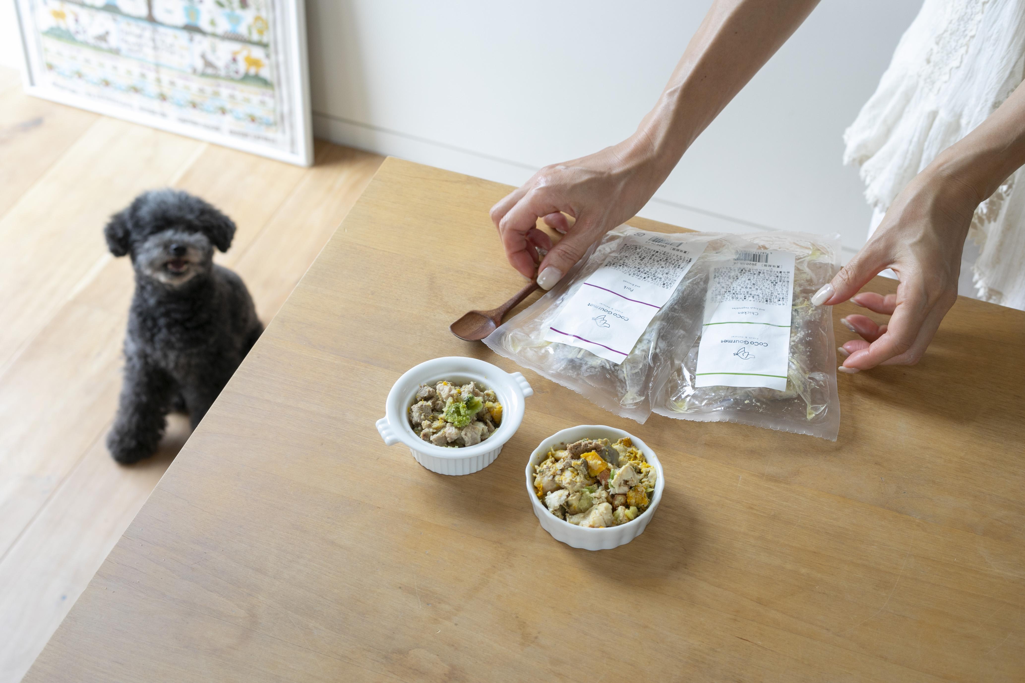 犬はきゅうり食べても大丈夫!美味しく食べれるレシピをご紹介!