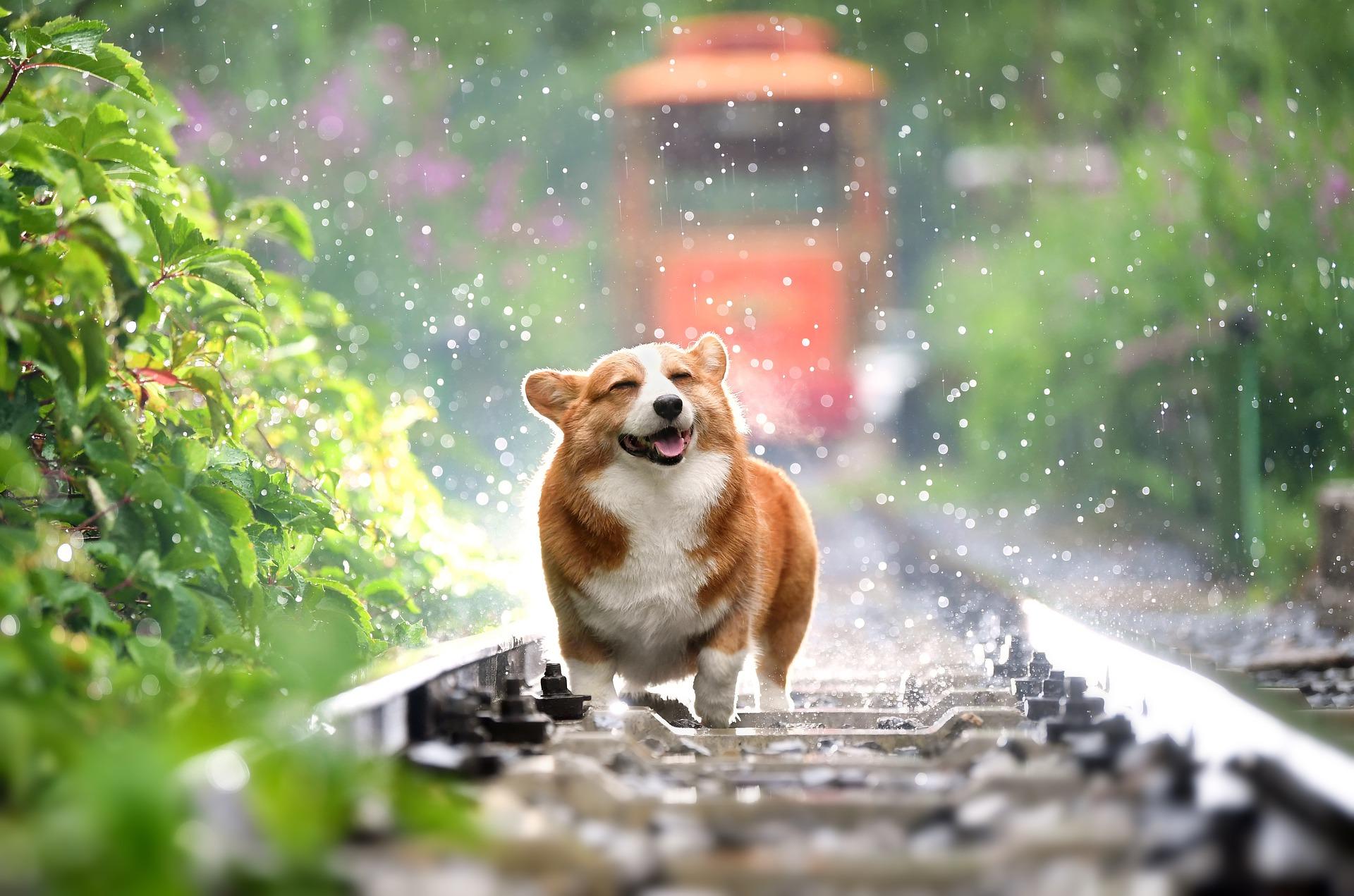 犬が甘えん坊で可愛い!甘えん坊な犬種から仕草まで紹介します