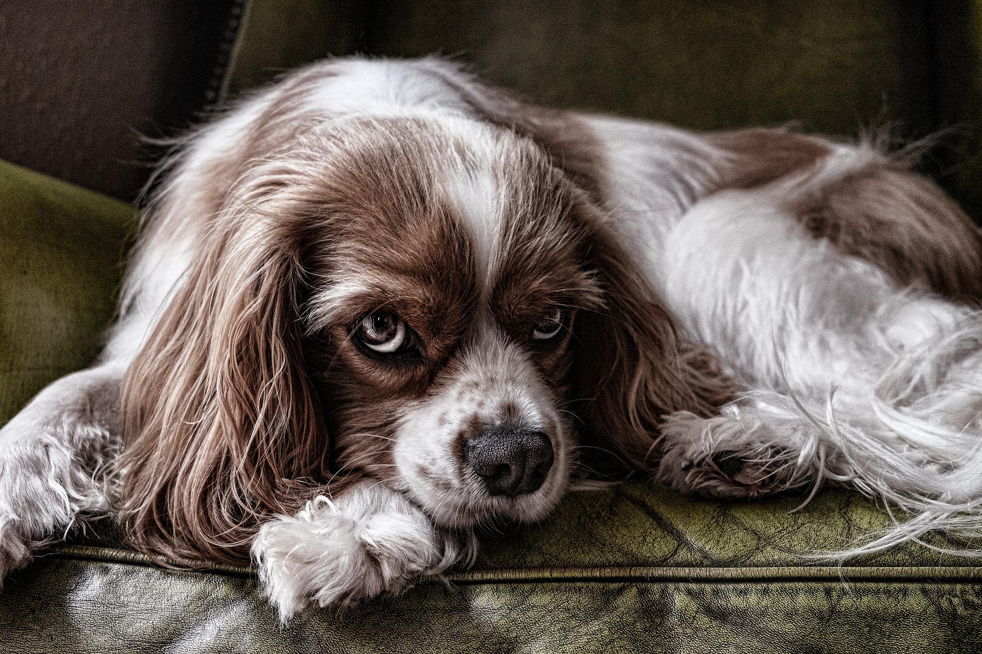 犬に血尿が!?血尿の原因から対策まで徹底して解説します