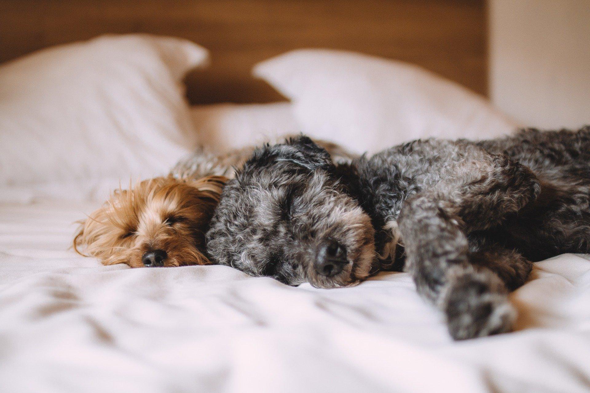 犬が頻繁に咳をする原因から対処法を徹底解説します