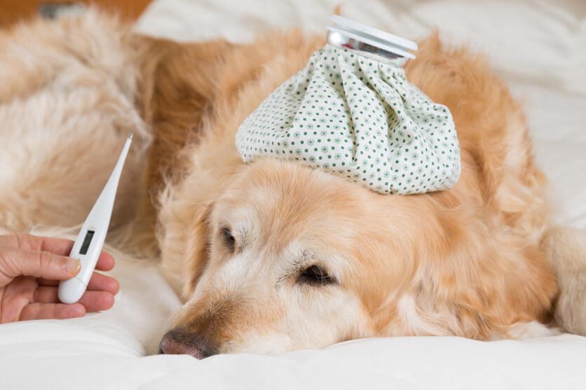 犬も熱中症になる!その原因や応急処置を徹底分析します!