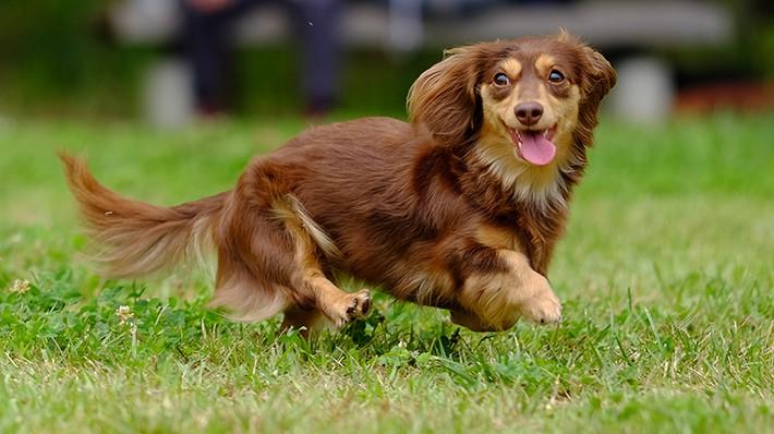 犬のヘルニアの原因から対策・治療法までを徹底的に解説します