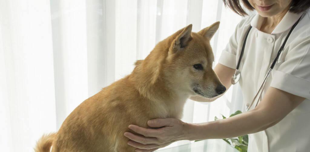 犬が下痢になる原因と家庭で出来る対策