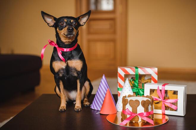 愛犬に送るプレゼント人気ランキングBEST15【おやつ・おもちゃ・高級品まで】