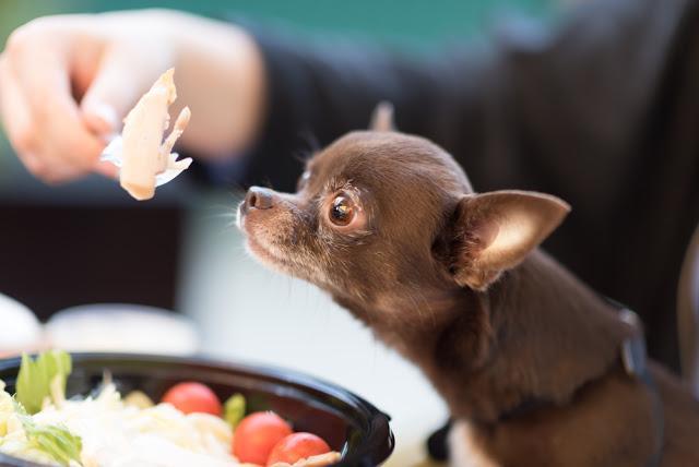 犬はささみはOK?美味しく食べる方法と注意点