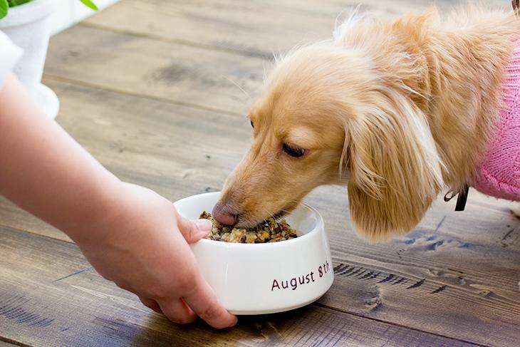 犬が喜ぶご飯の作り方と注意点