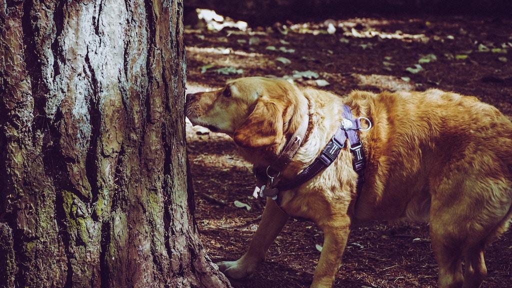 愛犬の体臭が臭いのはドッグフードが原因?臭くなりにくいドッグフードの選び方