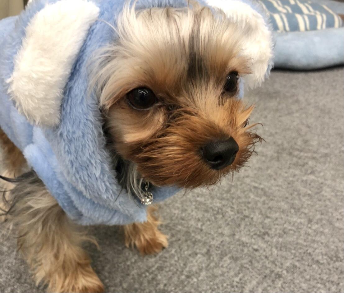 犬の涙やけを消すマッサージの方法と注意点
