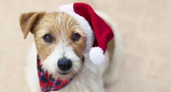 【2021年】愛犬と一緒に楽しもう!人気クリスマスグッズBEST10