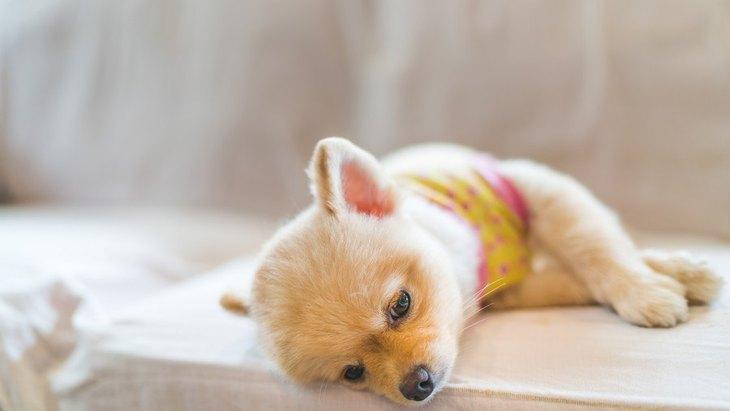 愛犬が夏バテで食欲不振の時の対処法