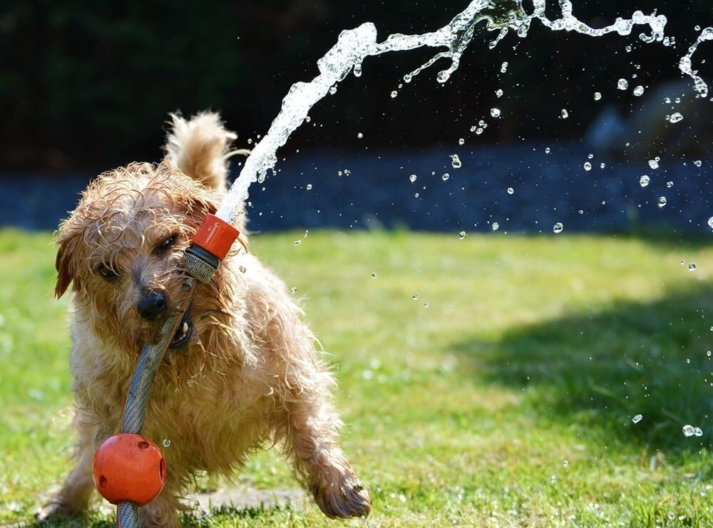 犬がぐったりしてたら夏バテ?暑い季節に気をつけるべきこと