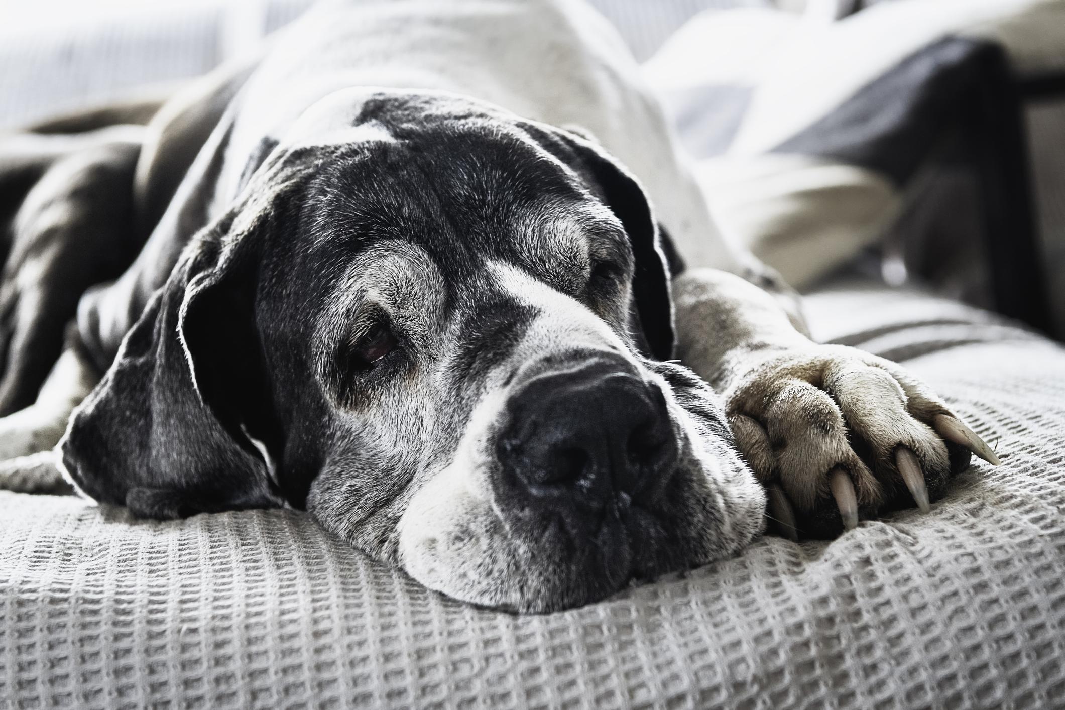 老犬がご飯を食べない時の原因と対策