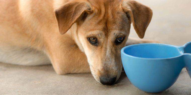犬がドライフードを食べない時の対策
