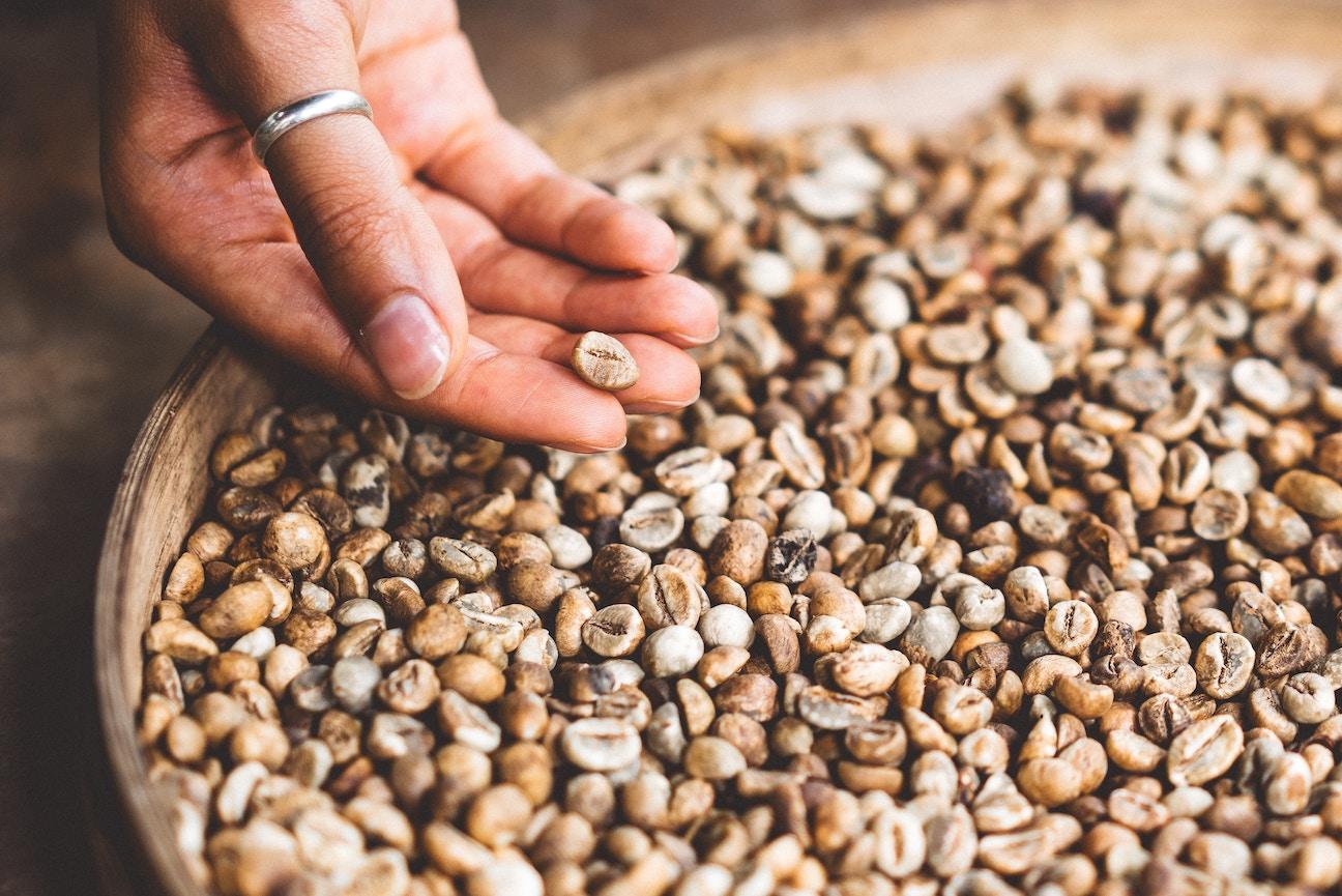 犬の穀物アレルギーの症状と対処法