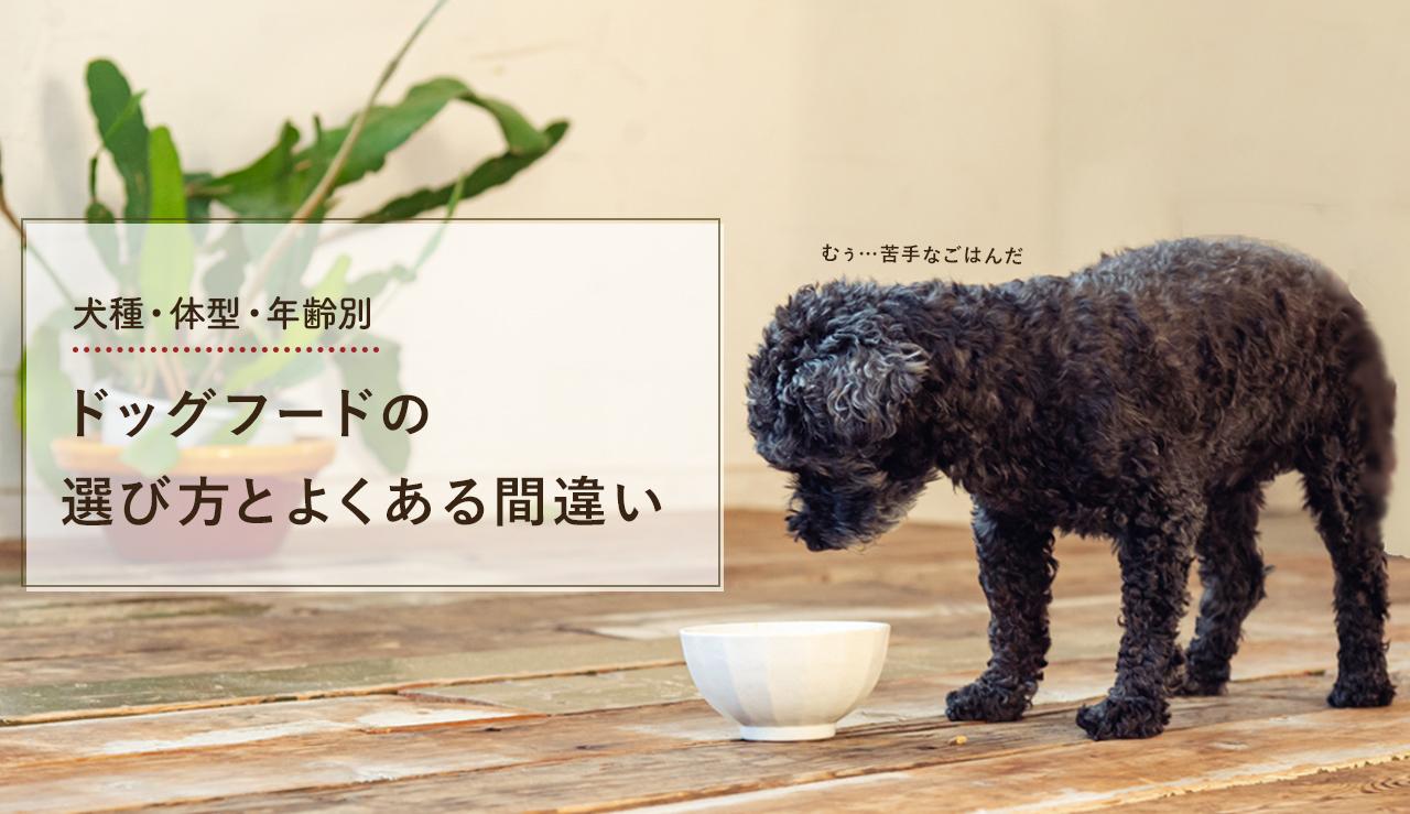 犬種・体型・年齢別!ドッグフードの選び方とよくある間違い