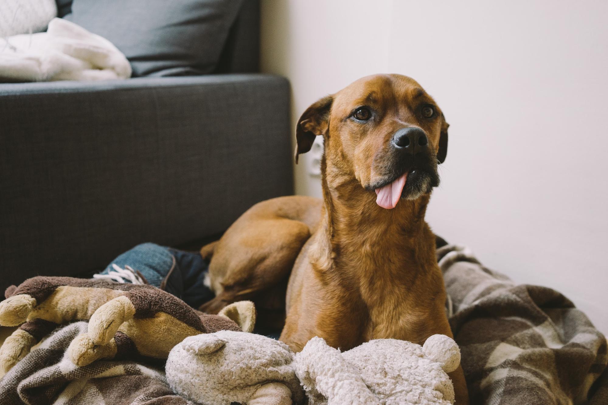 高齢犬・老犬がご飯を食べない時の原因と対策5選