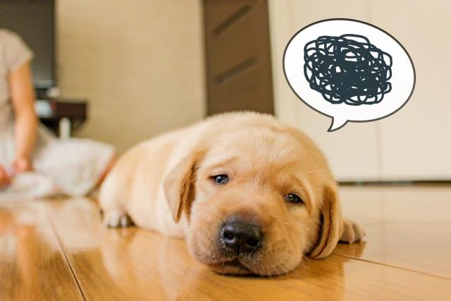 犬が下痢になってしまう原因と飼い主にできる対策