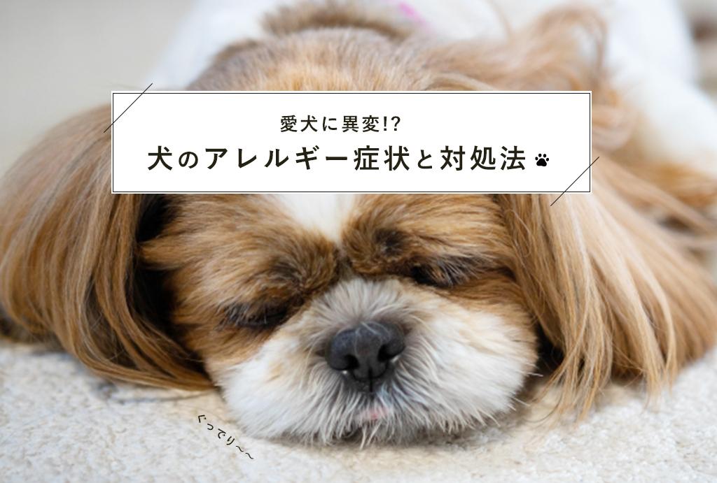 愛犬にアレルギーが起きた時の対処法と症状