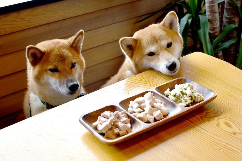 ドッグフードを食べない子に犬の手作りごはんがおすすめの理由