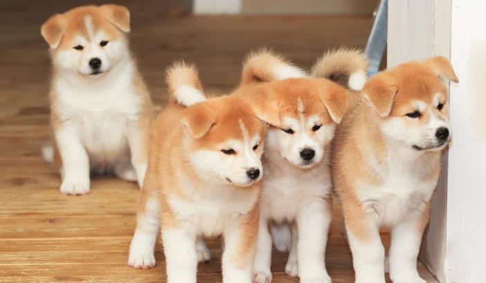 子犬向け手作りごはんの3つのポイント