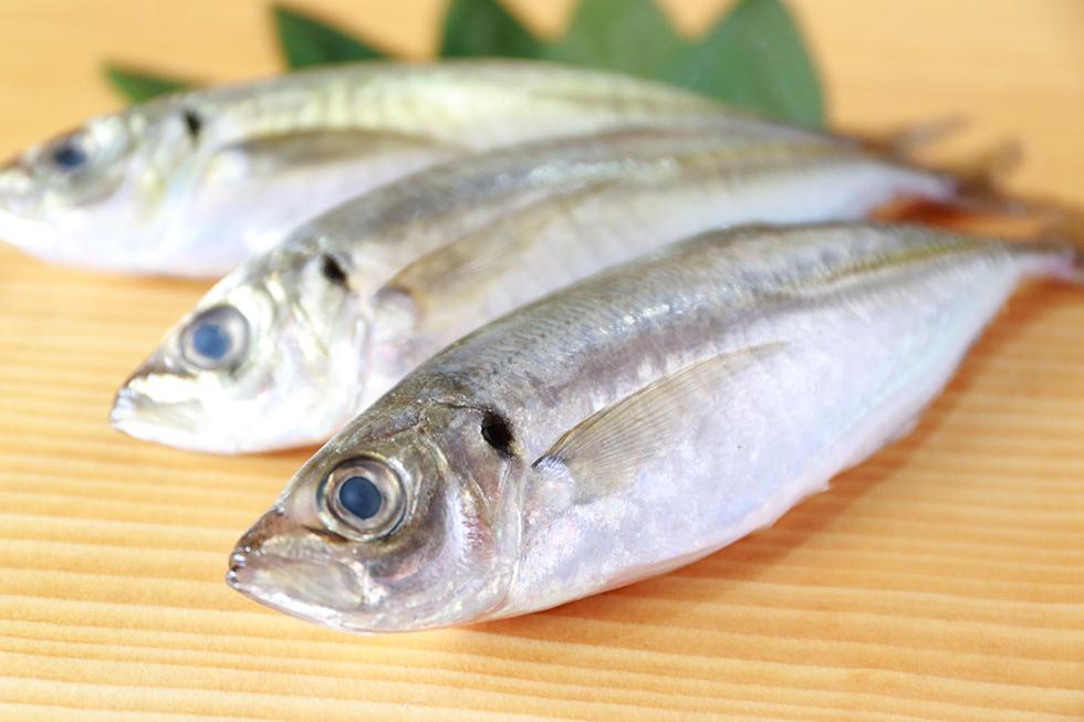 魚で作る犬の手作りごはんお手軽レシピ