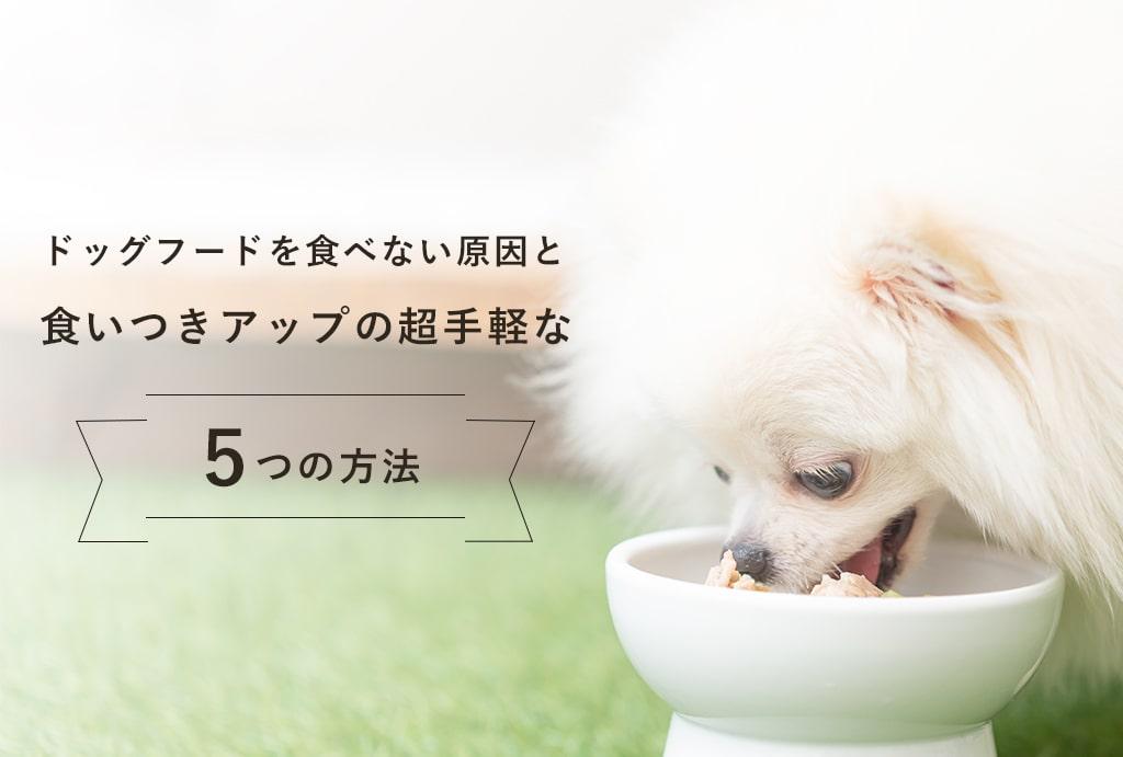 愛犬がドッグフードを食べない原因と5つの対策 | ご飯の食いつきを改善させる方法