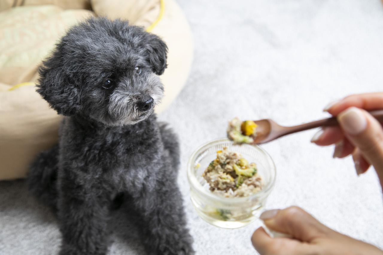 犬の手作りごはんを学ぶなら!おすすめ講座/セミナー5選