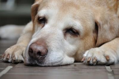 老犬が下痢になりやすい原因と対策